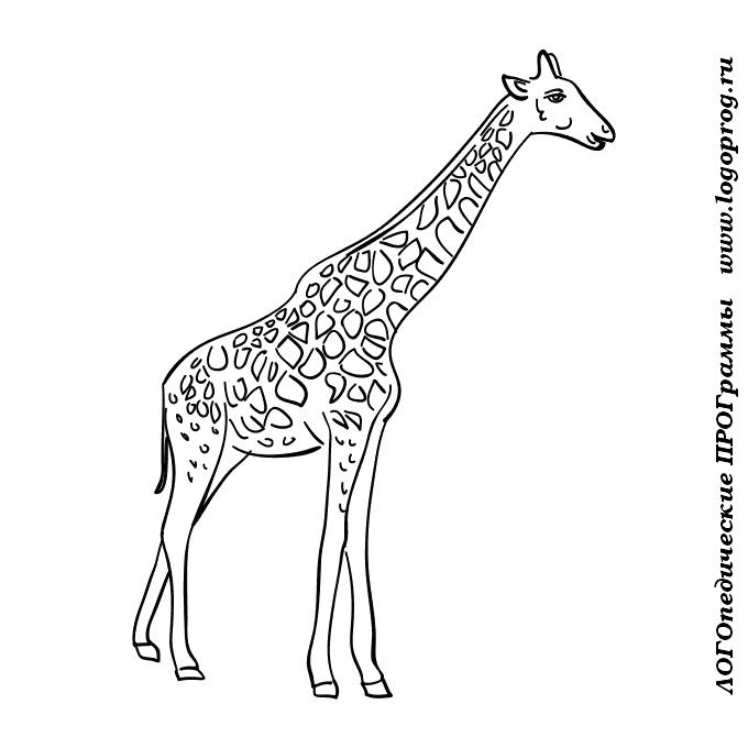 Зебра рисунок картинки