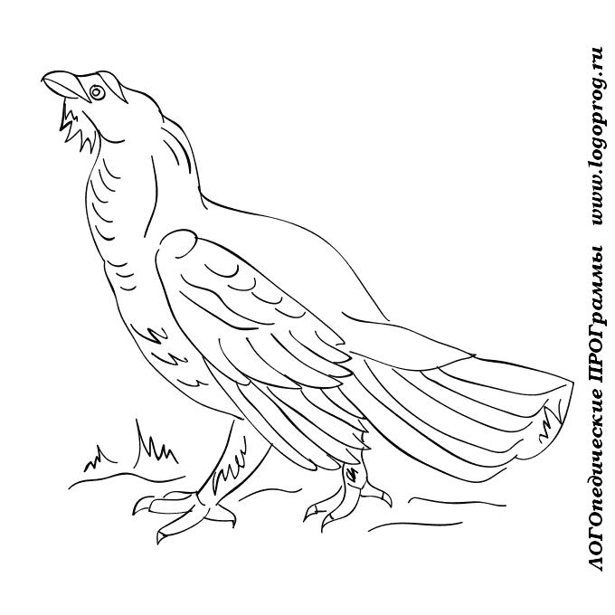 Птица символ маврикия птица счастья