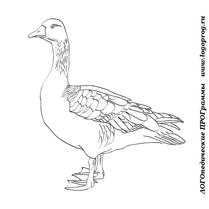 Картинки для детей гусей
