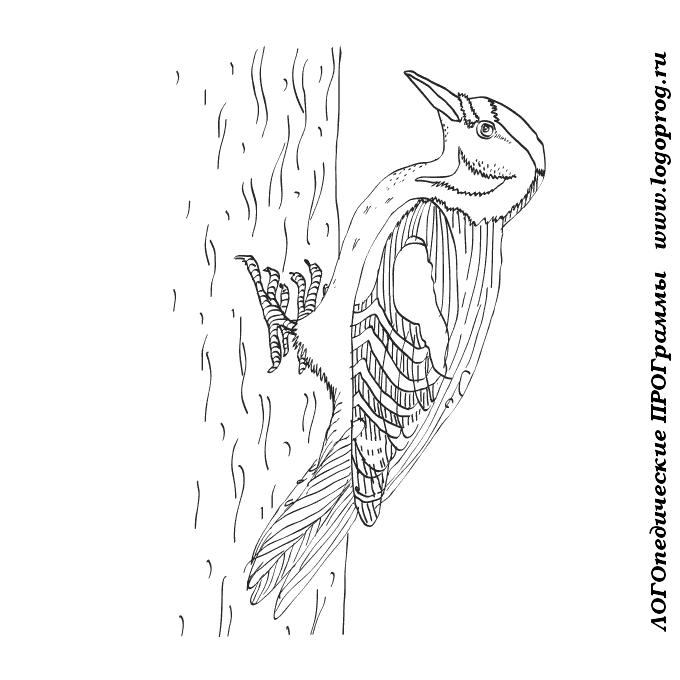 ученые картинки раскраски птиц дятел принимала участие разных