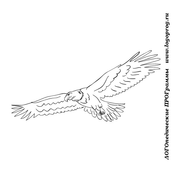 раскраска орел в полете обычной