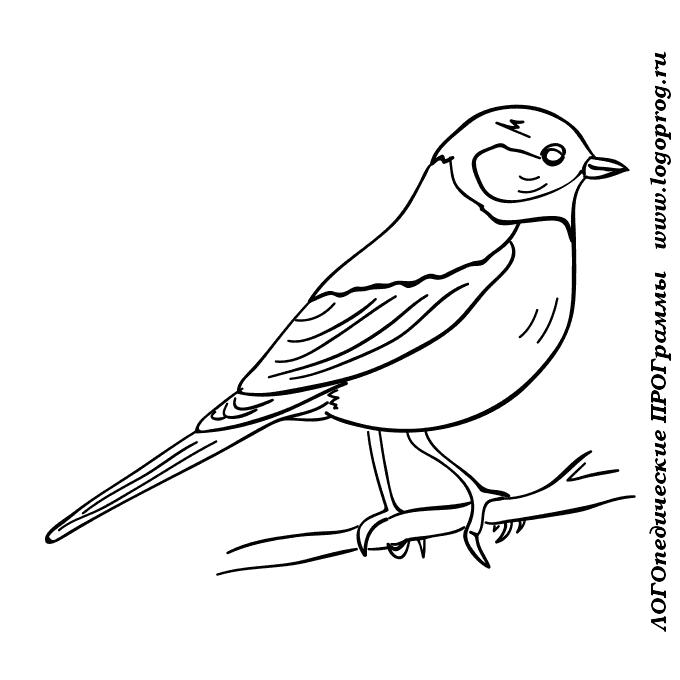 Раскраска птицы синица для детей
