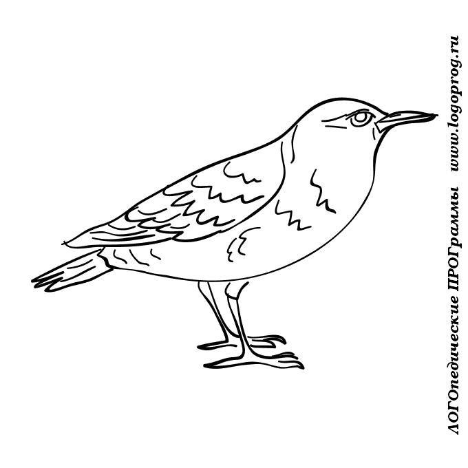 Картинки раскраски сова для детей