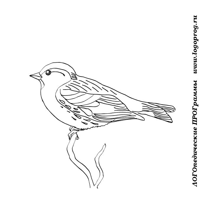 Раскраски птицы для детей снегири