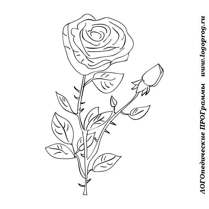 Розы раскраска